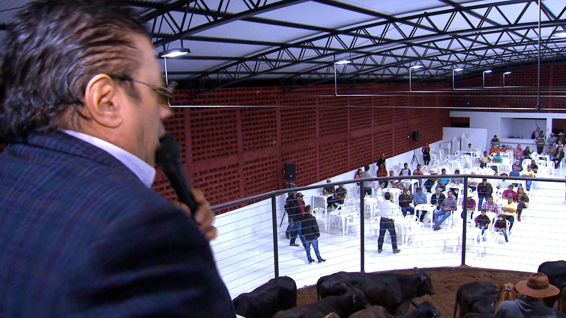 Leilões de gado presenciais têm público fiel - Notícias - Plantão Diário