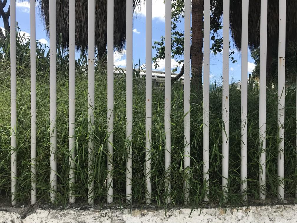 Matagal visível do lado de fora do Célio de Barros (Foto: Flávio Dilascio)
