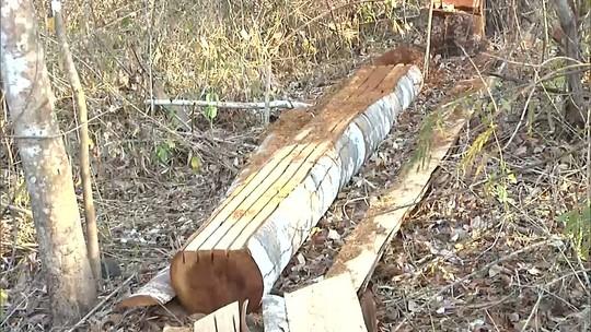 Mirante Rural destaca ação de madeireiros em reserva no MA