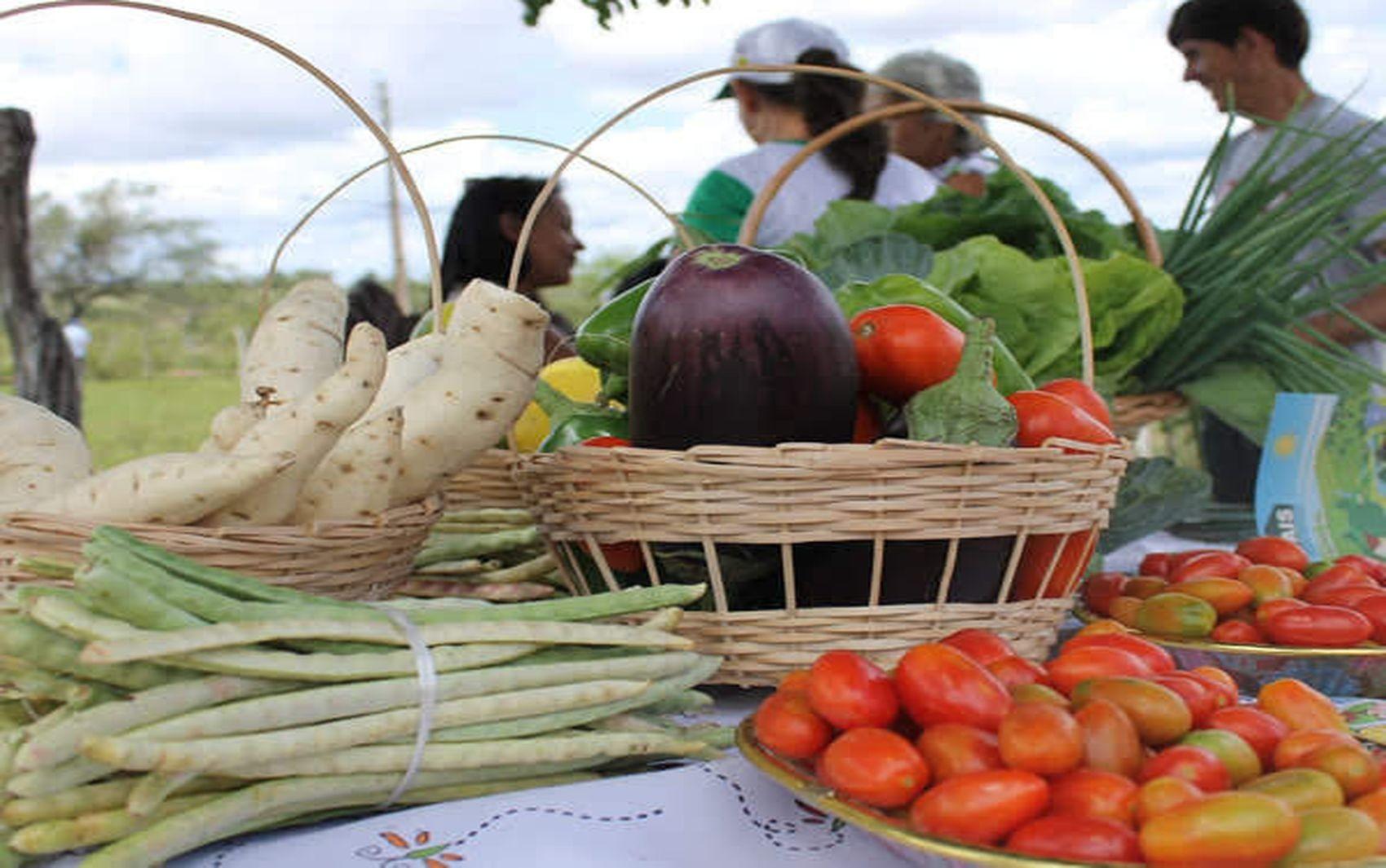 Maceió lança edital para adquirir alimentos da agricultura familiar para kits de merenda escolar