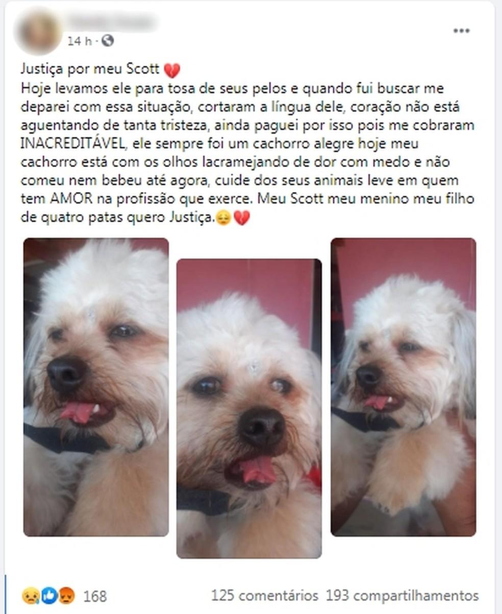 Desabafo de dona de animal que teve a língua cortada em pet shop ganhou repercussão nas redes sociais — Foto: Facebook/Reprodução