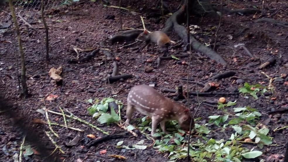 Animais foram levados e poderão ser devolvidos à natureza — Foto: Dema/Divulgação