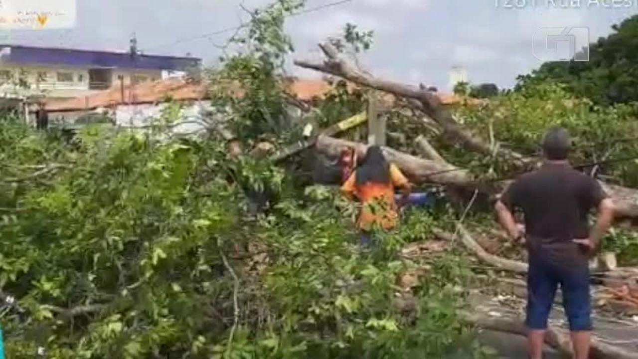 Árvore cai sobre rede elétrica e quebra poste em Teresina