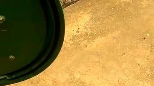 Filhote de jacaré é encontrado dentro de residência, em Planaltina, no DF; vídeos