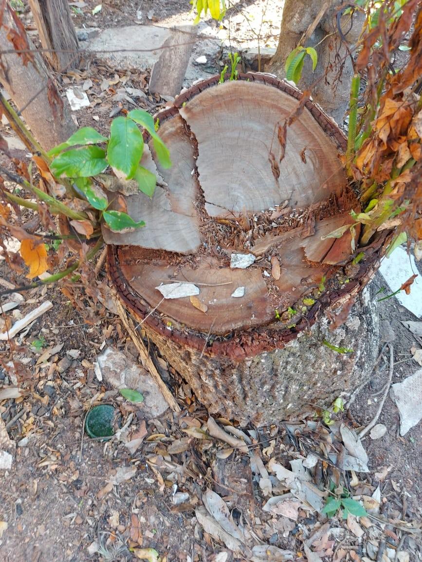 Sitiante recebe multa de R$ 3 mil pela supressão irregular de árvores nativas, em Presidente Prudente