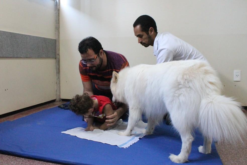 As crainças recebem estímulos através do contato com os cães (Foto: Amanda Lima)