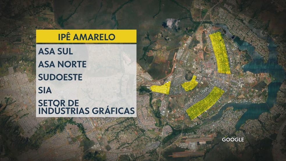 Projeto Zona Verde do DF Ipê Amarelo — Foto: TV Globo/Reprodução