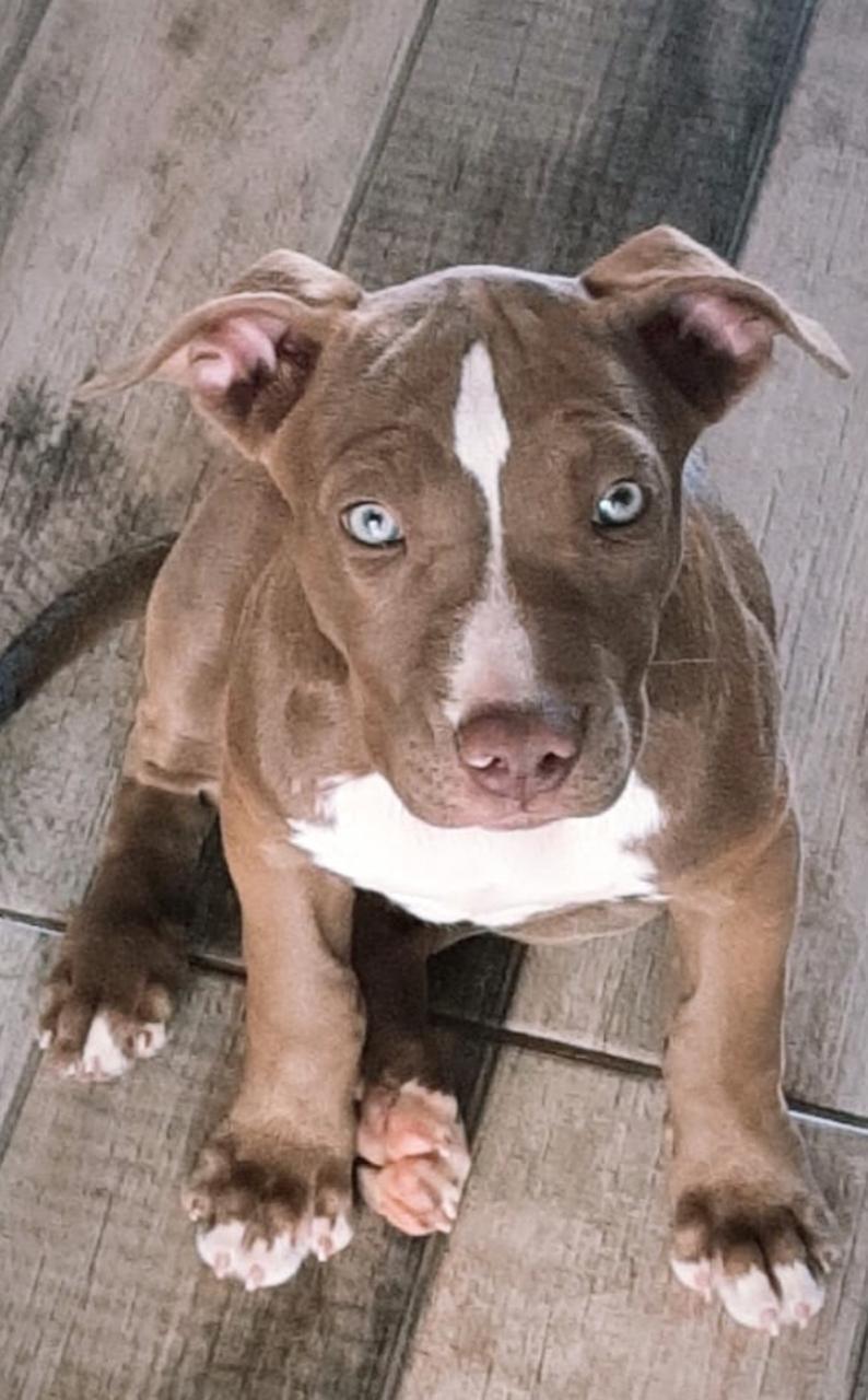 Bêbada, mulher tenta esganar a filha e mata cão pitbull; polícia diz que ela foi presa e indiciada por 5 crimes em MS