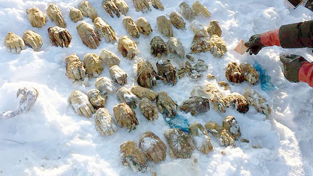 54 mãos são encontradas em mala deixada próxima ao Rio Amur. (Foto: The Siberian Times)