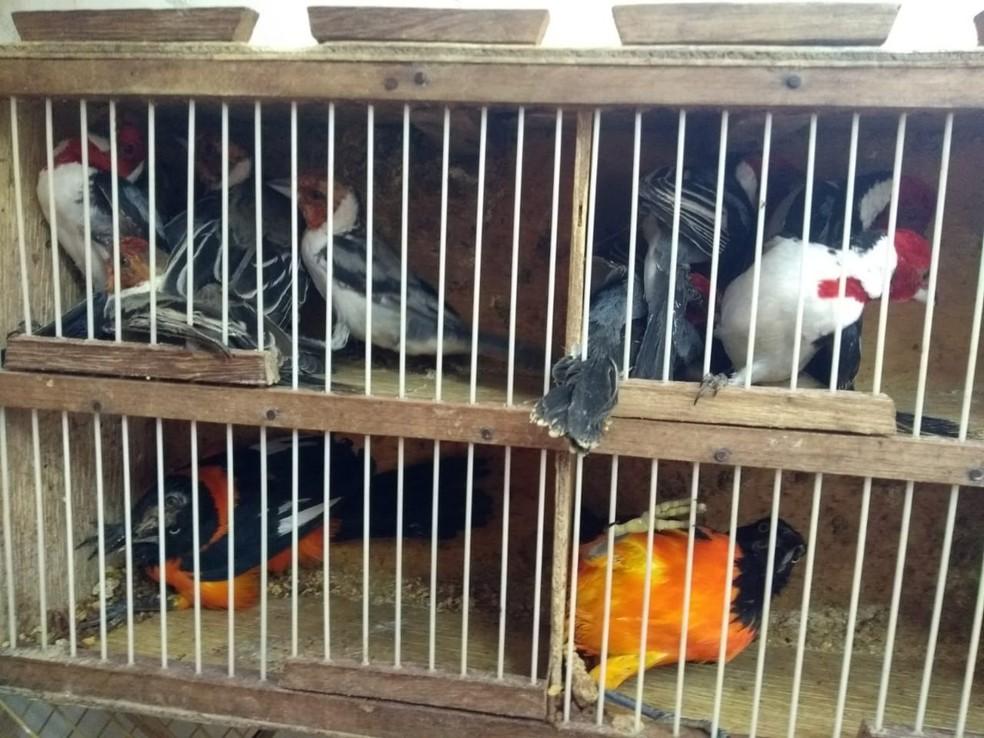 Pássaros apreendidos em feira de Salgueiro — Foto: Divulgação/ 8º BPM