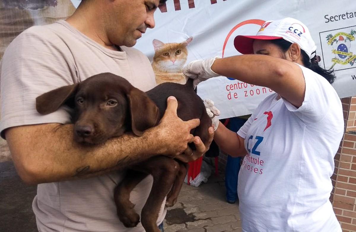 CCZ inicia nova fase da vacinação de cães e gatos contra a raiva em Campos, no RJ