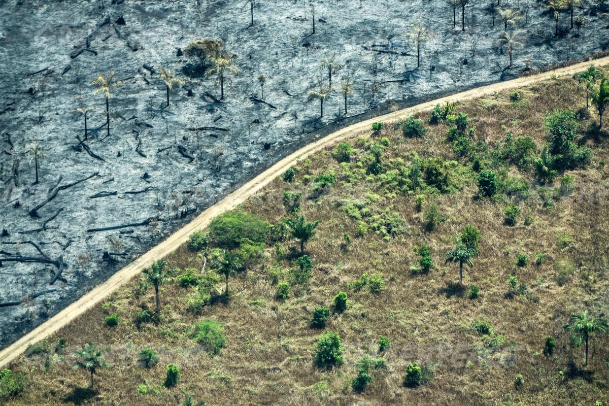 Emissões de carbono de 2018 cresceram em 0,3%. Para especialistas, queimadas e desmatamentos deste ano fará com que índices de 2019 sejam ainda maiores (Foto: Reprodução Greenpeace)