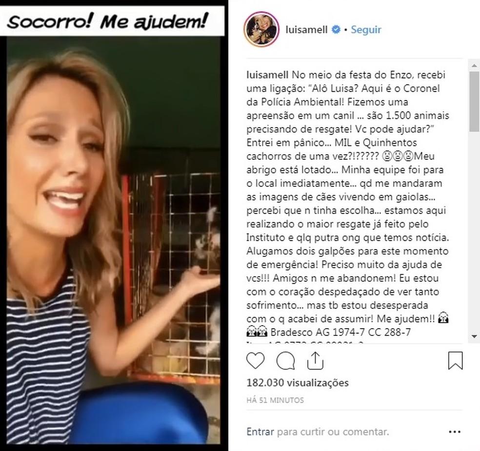 ONG da ativista Luisa Mell foi resgatar mais de 1,5 mil de canil em Piedade — Foto: Instagram/Reprodução