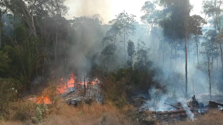 queimada-amazonia (Foto: Reprodução/Ed. Globo)