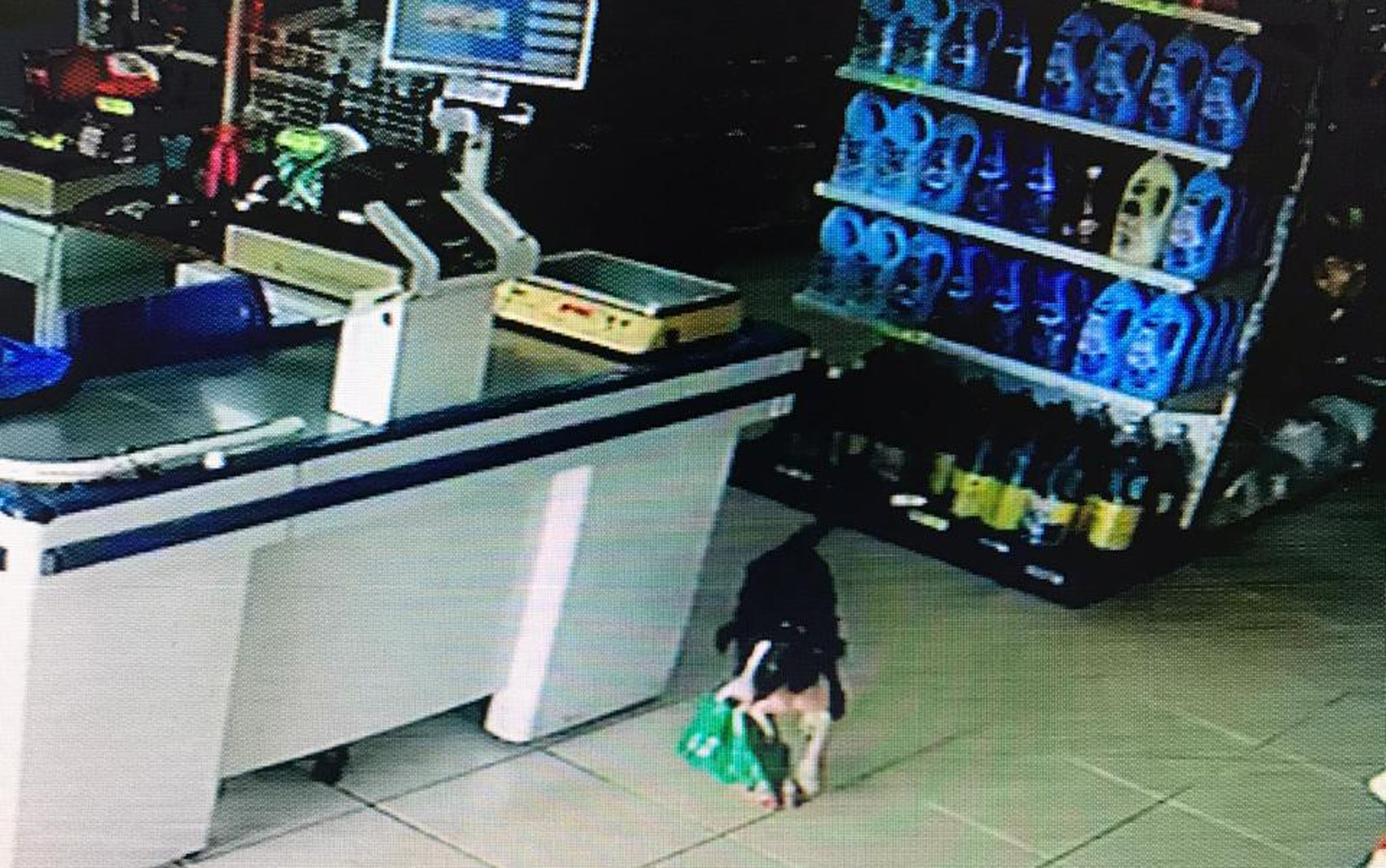 Vídeo que mostra cão 'furtando' pacote de rosquinhas em Morro Agudo, SP, viraliza na web - Notícias - Plantão Diário