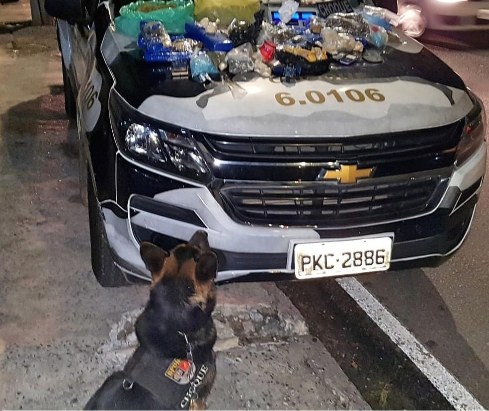 Cão farejador, de nome Ajax, localizou entorpecentes em imóvel no bairro de Plataforma (Foto: SSP/BA)