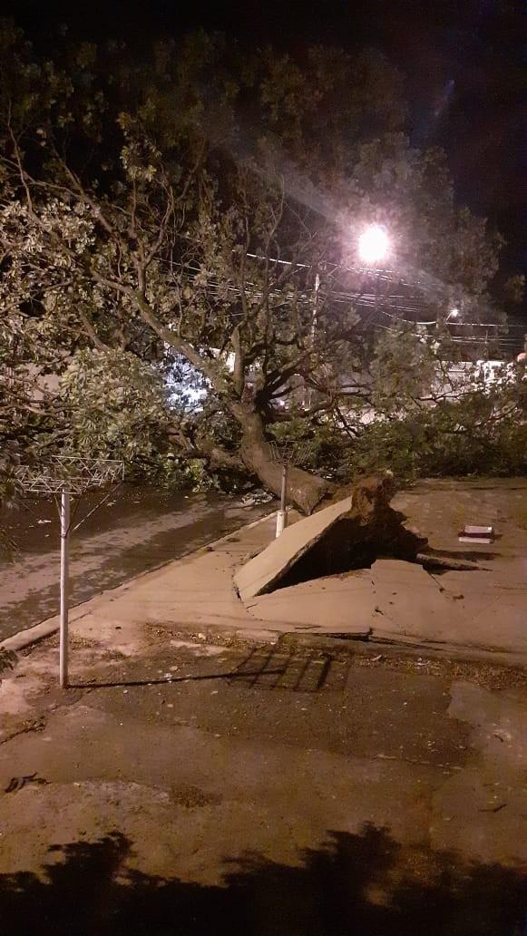 Chuva causa destelhamento, queda de árvores, erosão e alaga vias em Campinas