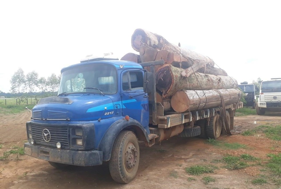 Three charged for illegal logging in Candeias do Jamari