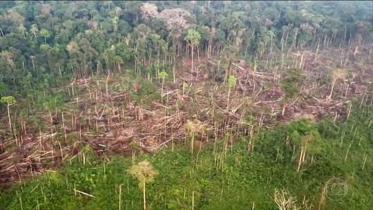 Área de alertas de desmatamento da Amazônia entre janeiro e setembro é quase o dobro do mesmo período de 2018