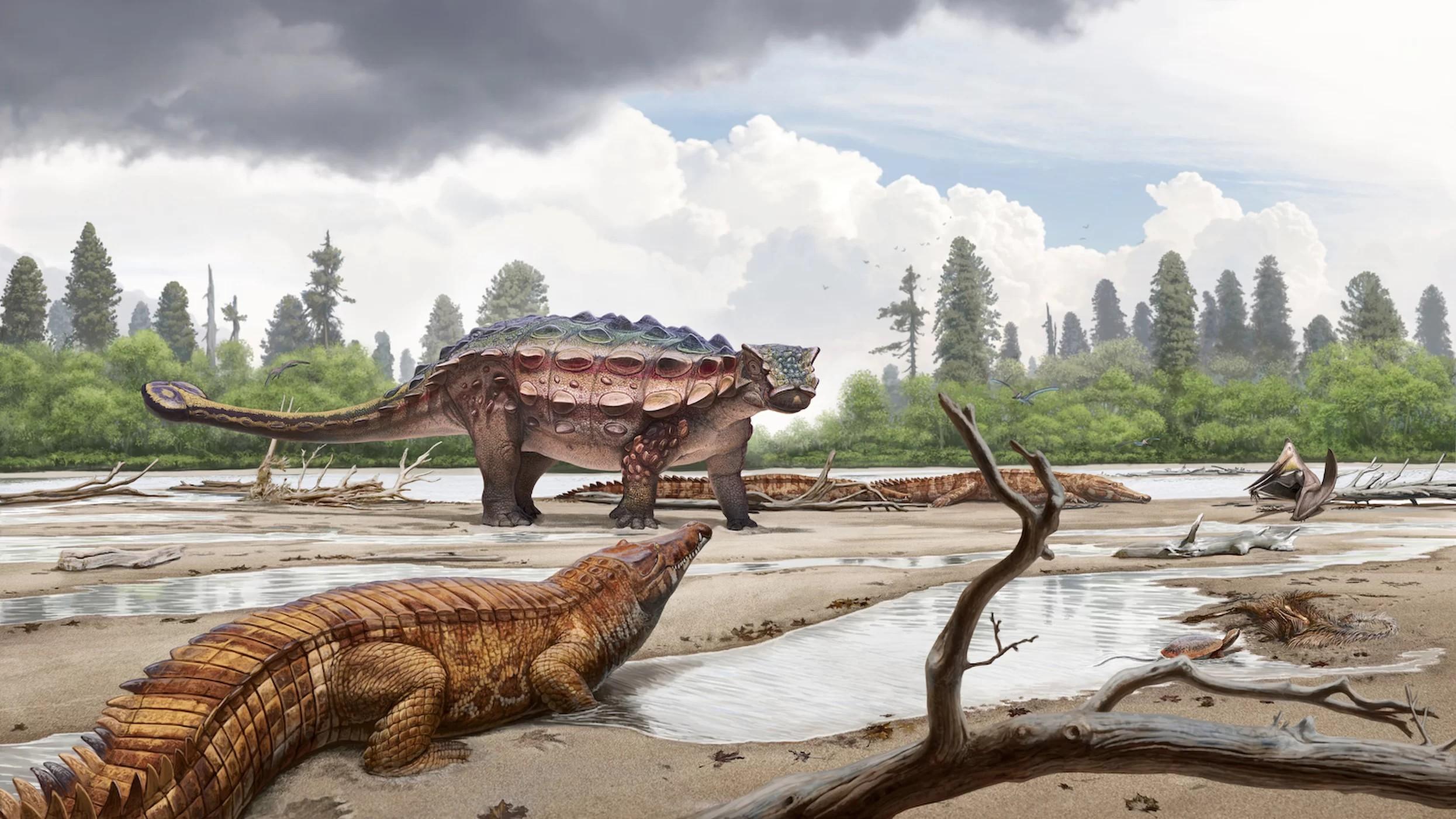 A espécie recém-descoberta ajuda a preencher a árvore evolutiva dos anquilossauros  (Foto: Randall Irmis/ NHMU)