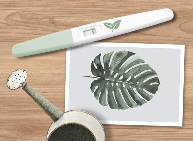 Guia para donos de plantas de primeira viagem
