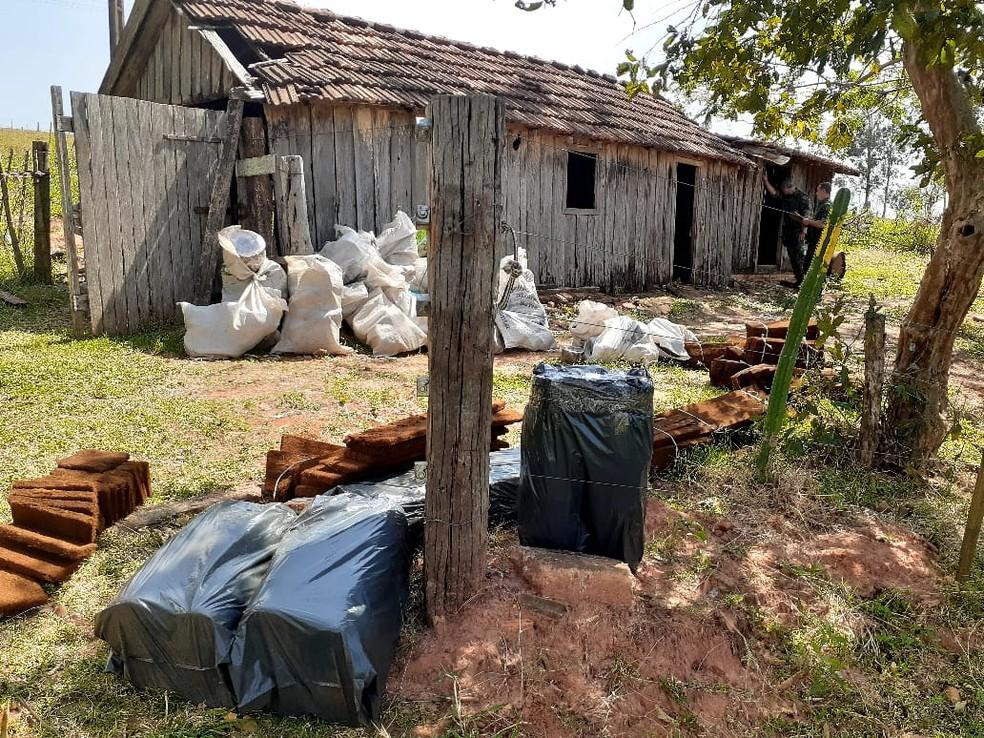 Homem tinha depósito clandestino de xaxim em Indiana — Foto: Polícia Militar Ambiental