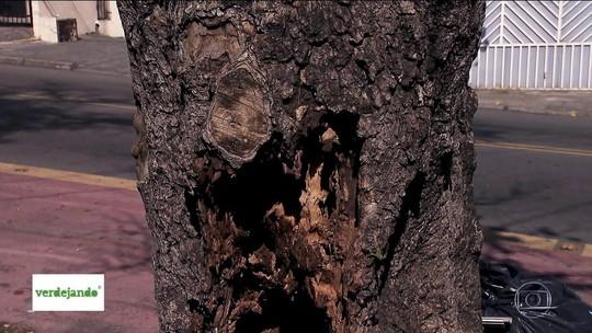 SP perdeu 2,3 mil árvores de janeiro a agosto