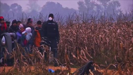 Saiba quais são os direitos dos refugiados no Brasil