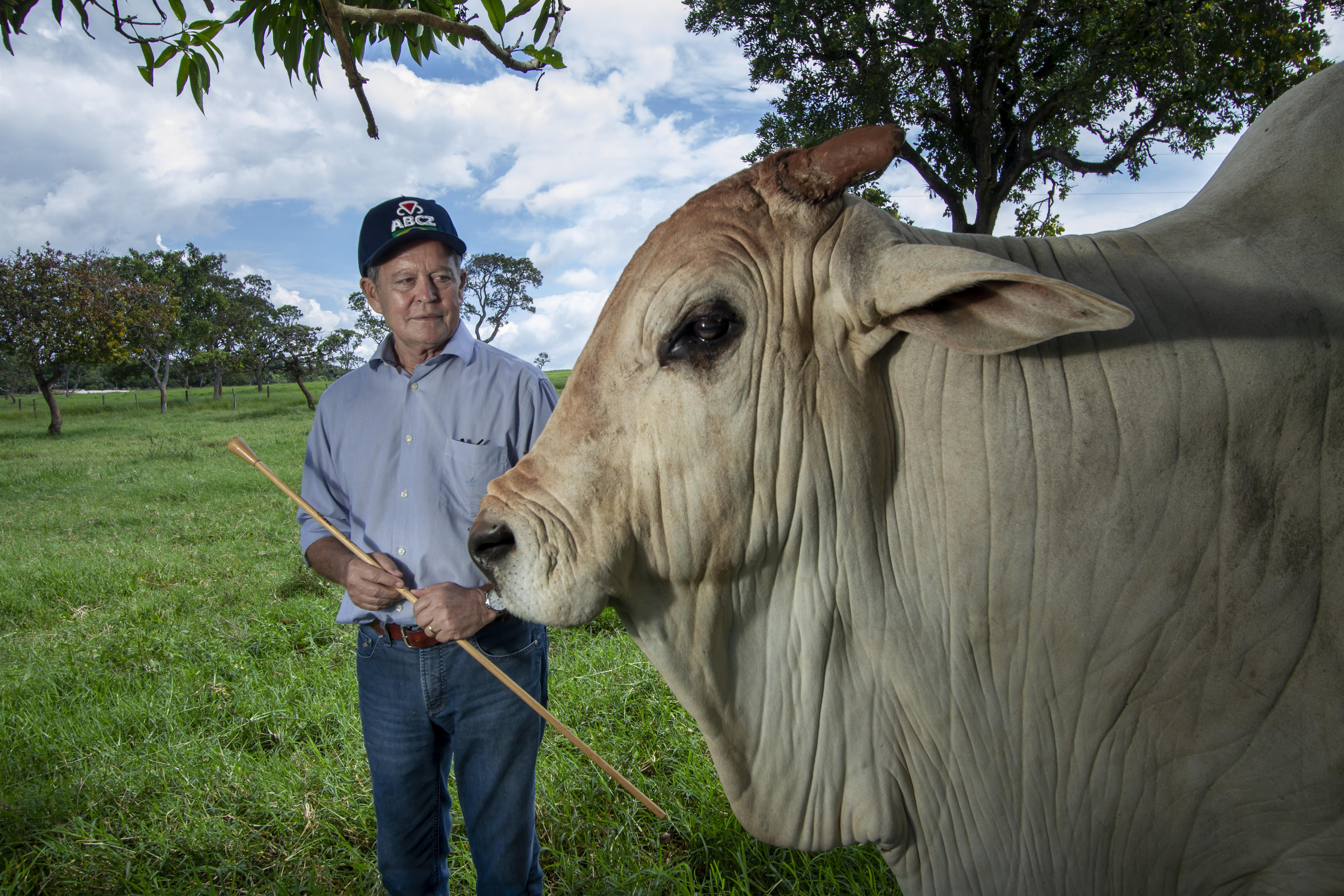 O criador Arnaldo Borges, presidente da ABCZ e o touro nelore Nasik, de 9 anos (Foto: Rogerio Albuquerque)