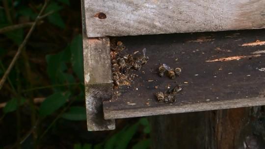 Laudo sobre morte de abelhas aponta princípios ativos de agrotóxicos