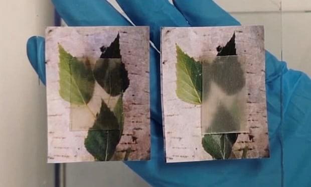 Madeira transparente, que retém e dispersa calor,  pode ser usada na construção de casas sustentáveis (Foto:  Sociedade Química Americana ( ACS))