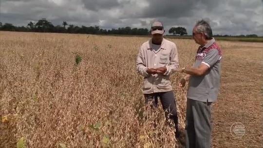 Sem chuvas, produtores de soja 'comemoram' perda 10% na safra