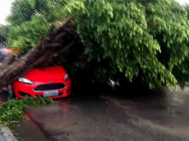 Por causa das chuvas e dos ventos, uma árvore localizada na Rua Manuel Nunes, no Bairro Antônio Bezerra, caiu na via. Ninguém ficou ferido. (Foto: Reprodução/TV Verdes Mares)
