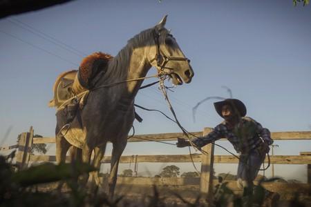 Brazilian cowboys - foto
