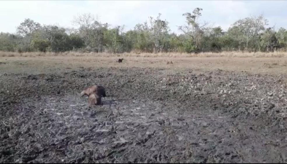 Lagoa seca após queimadas e meses sem chuva no Pantanal — Foto: Júlio Reiners/Arquivo pessoal