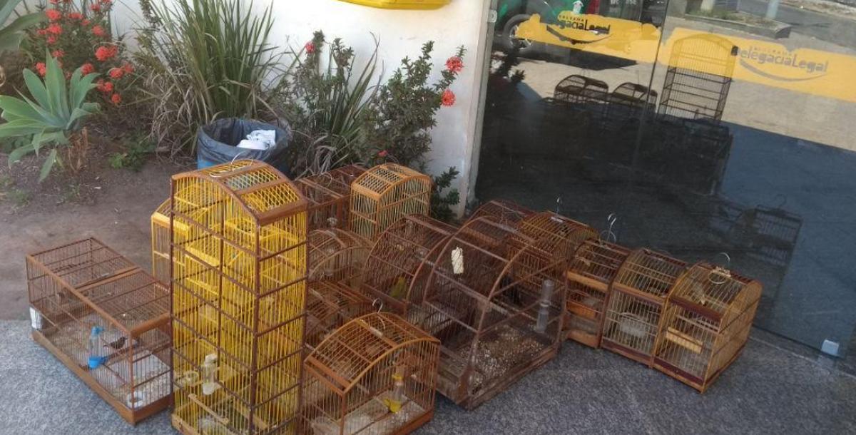 Polícia Ambiental resgata 17 pássaros silvestres em Campos, no RJ
