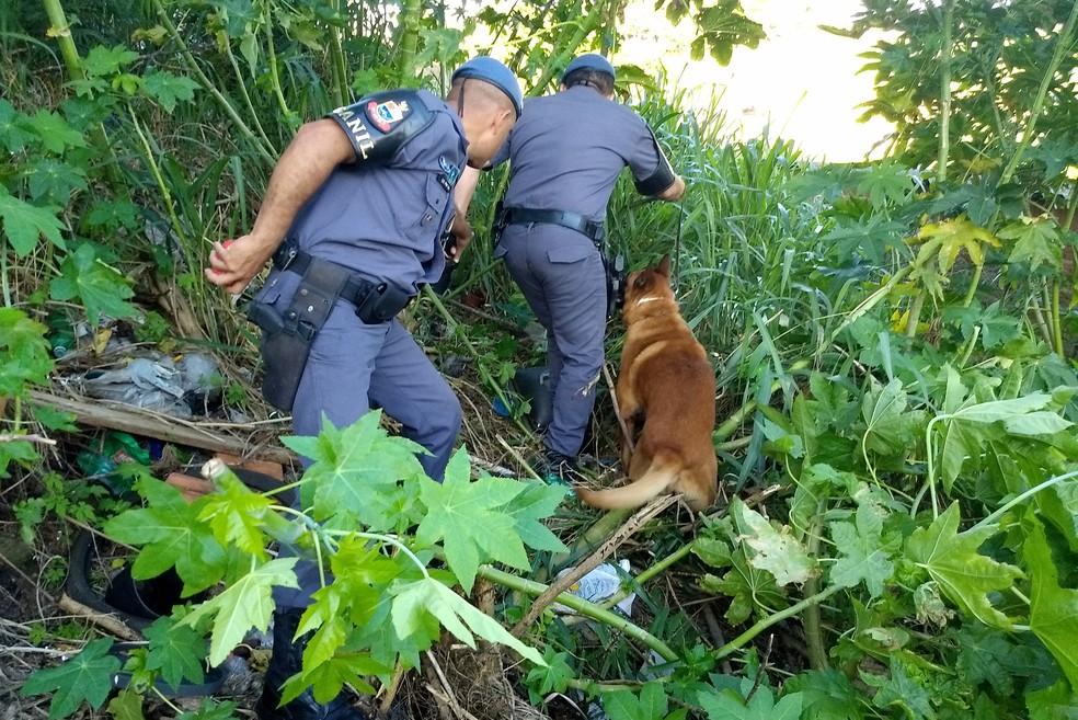 Se não fossem encontradas pelos cães, drogas ainda poderiam estar nas ruas (Foto: Stephanie Fonseca/G1)
