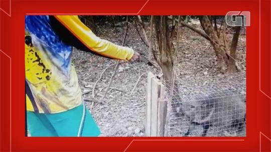 Polícia prende caçador após ele capturar e atirar em animais silvestres dentro de jaula em Bonito; veja o vídeo