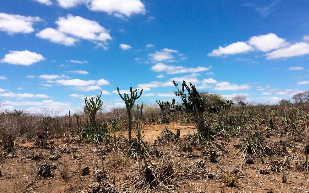 Defesa Civil Nacional reconhece situação de emergência em 146 municípios da BA por causa da seca . â?? Foto: Henrique Mendes/G1