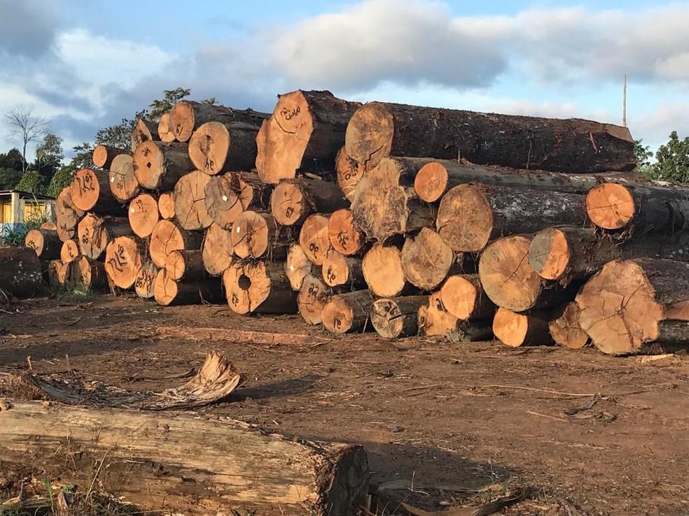 Dados oficiais mostram que o desmatamento na Amazônia é crescente desde 2012 — Foto: Polícia Federal/Divulgação
