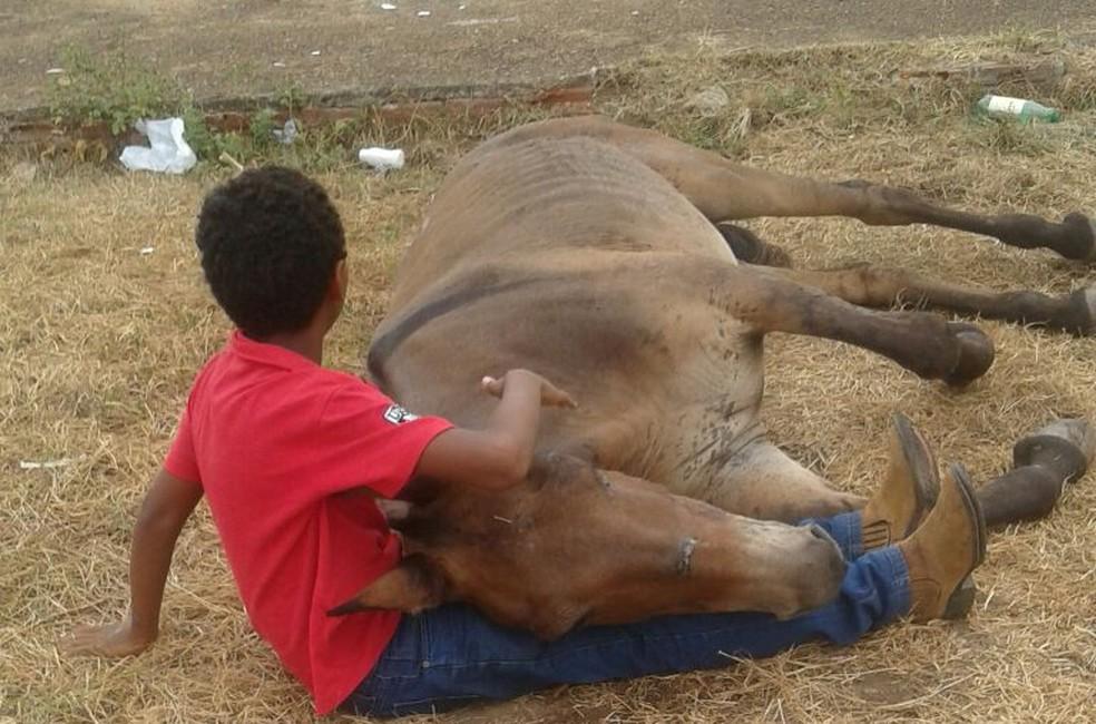 Criança foi vista consolando o animal abandonado (Foto: Divulgação/Edna dos Santos)
