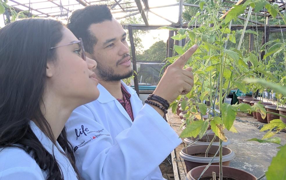 Cientista baiano quer utilizar bactérias de vegetação da caatinga para criar produto que aumente resitência de outras espécie à seca — Foto: Secretaria de Ciência, Tecnologia e Inovação/Divulgação