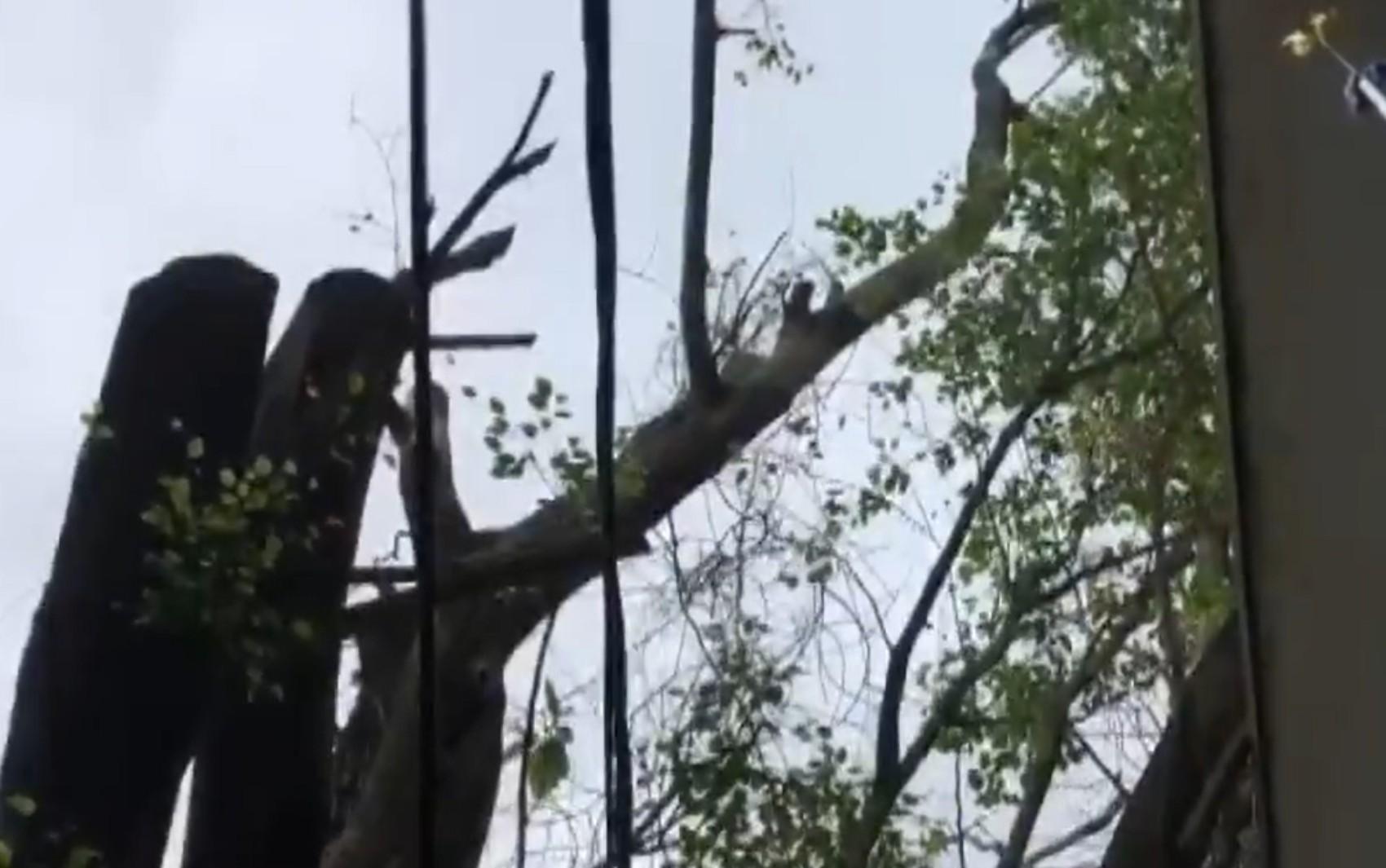 Árvore cai e atinge quatro casas no bairro do Rio Vermelho, em Salvador