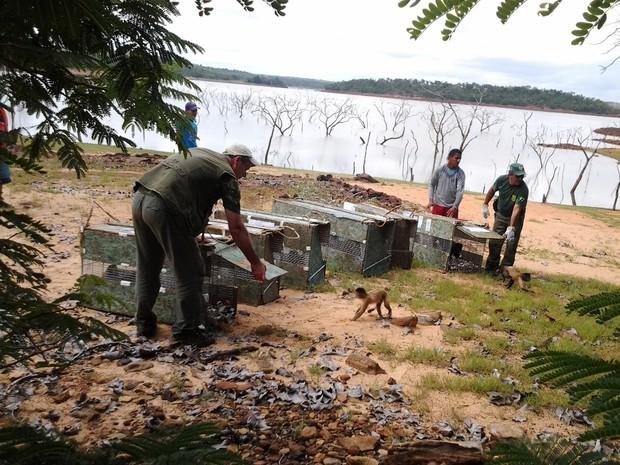 Primeira leva de animais foi solta em área de preservação no PIauí (Fot Rennan Nunes/Tv Clube)
