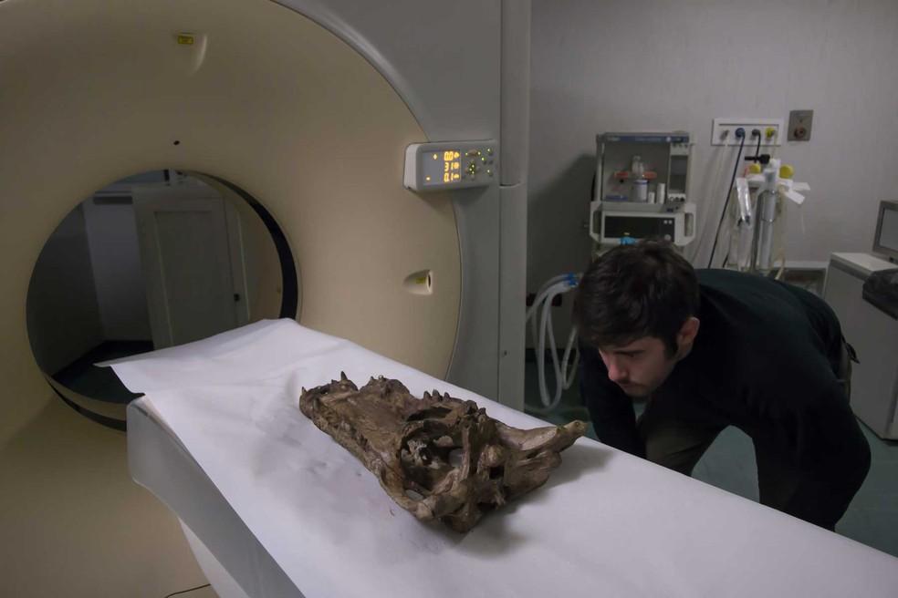 Cientistas colocaram fósseis em equipamento de ressonância magnética — Foto: Divulgação/Nature