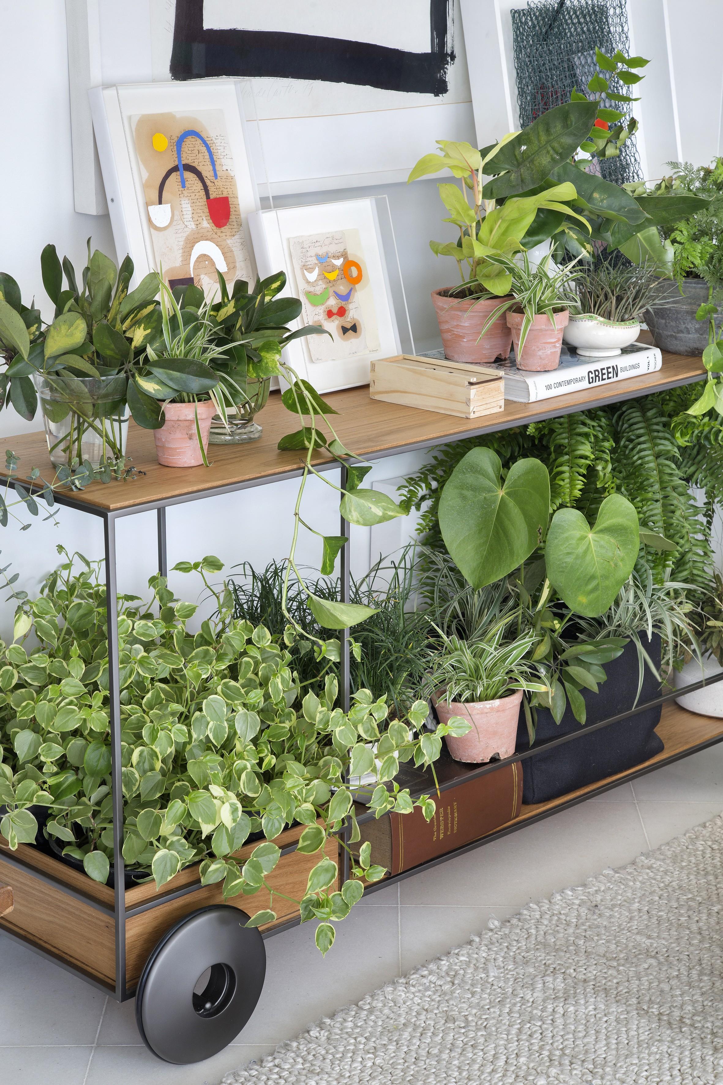Folhagens para jardim: inspire-se no estilo de Burle Marx (Foto: Juliano Colodeti/ MCA Estúdio)