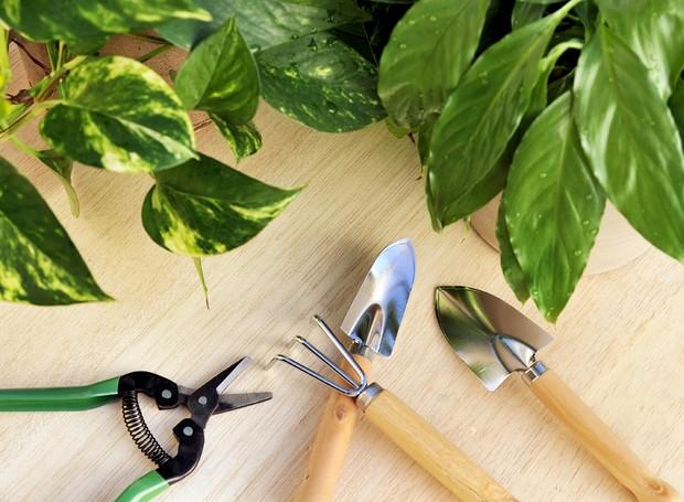 Tesoura de poda, minipás e ancinho pequeno são ferramentas úteis para os jardineiros domésticos (Foto: Getty Images/iStockphoto)