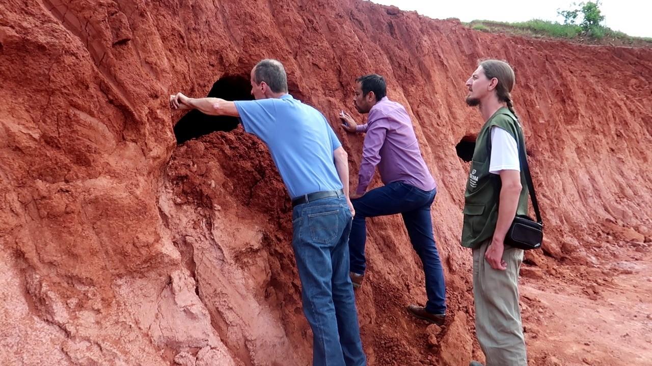 Cientistas encontram túneis pré-históricos abertos por preguiças gigantes em Campo Bom