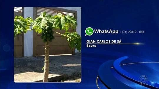 Confira as reclamações dos telespectadores pelo WhatsApp da TV TEM