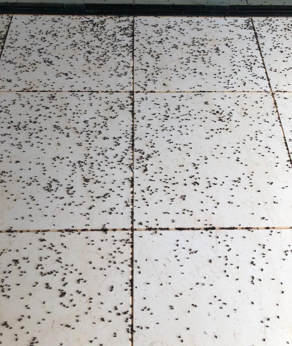 Infestação de moscas causa perturbação de moradores de bairro rural, em Tietê (SP) — Foto: Arquivo Pessoal